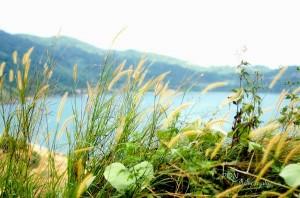 Du lịch bán đảo Sơn Trà hoang sơ